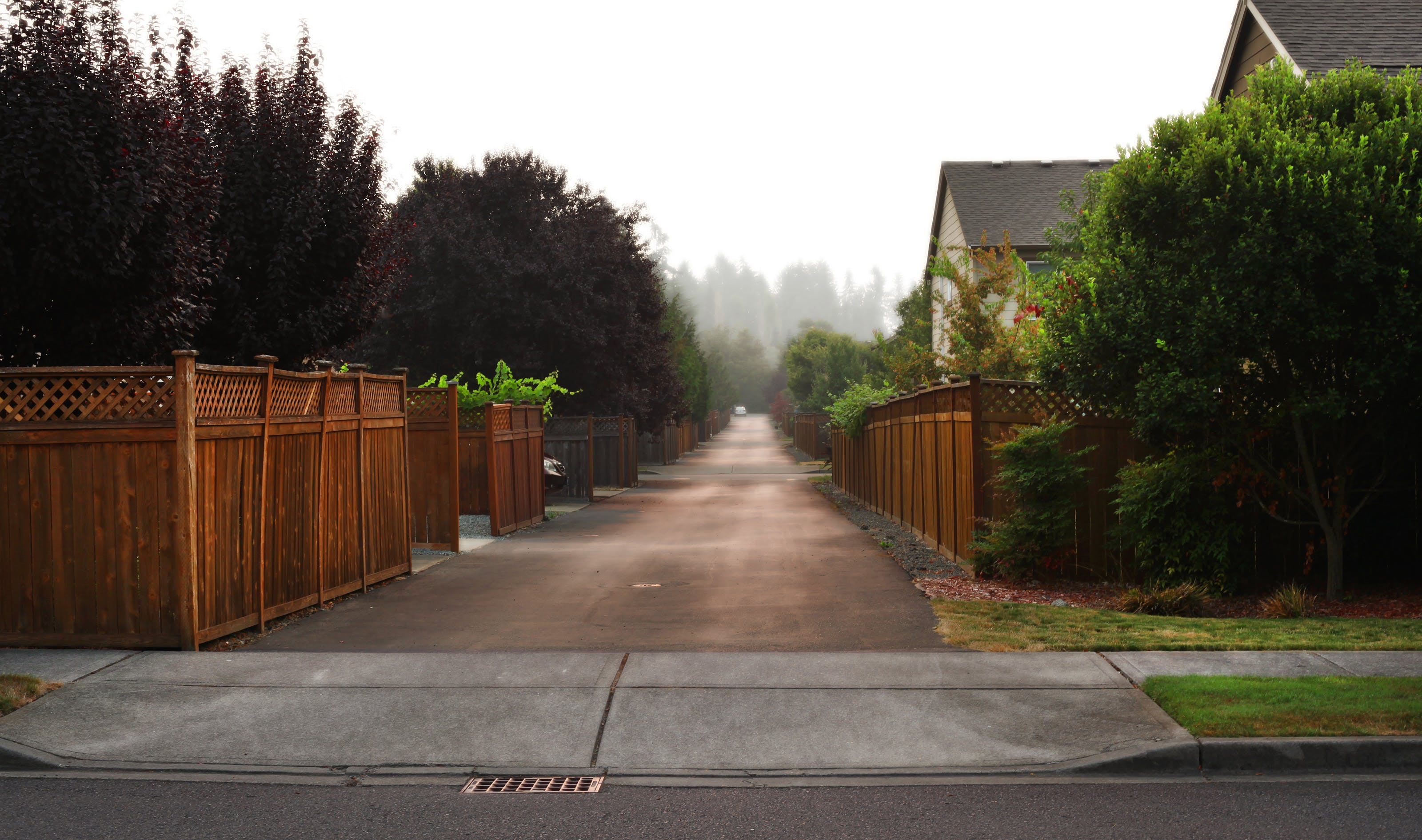 Free stock photo of alley fog trees houses