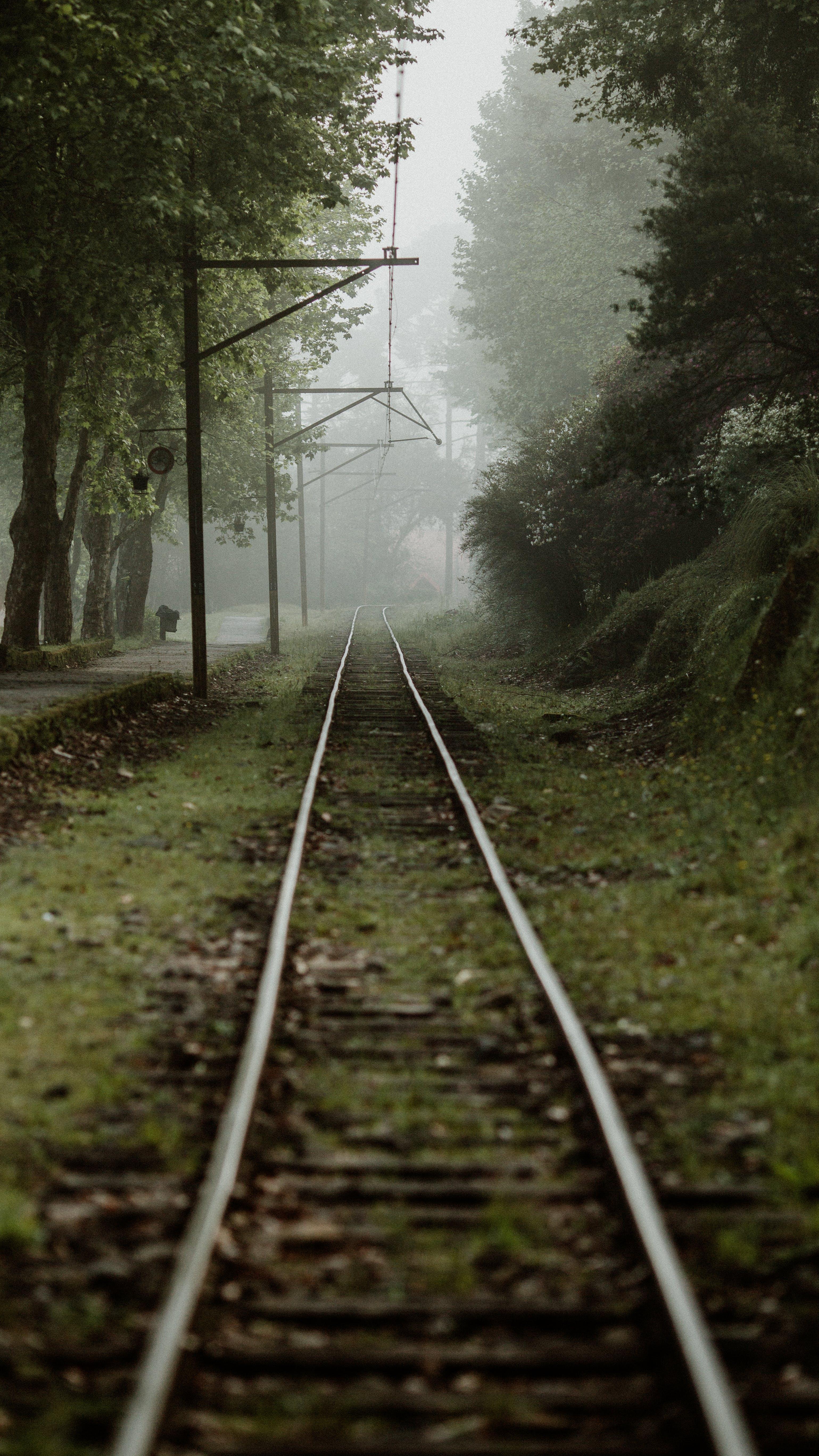 Kostenloses Stock Foto zu baum, kalt, nebel, reail road