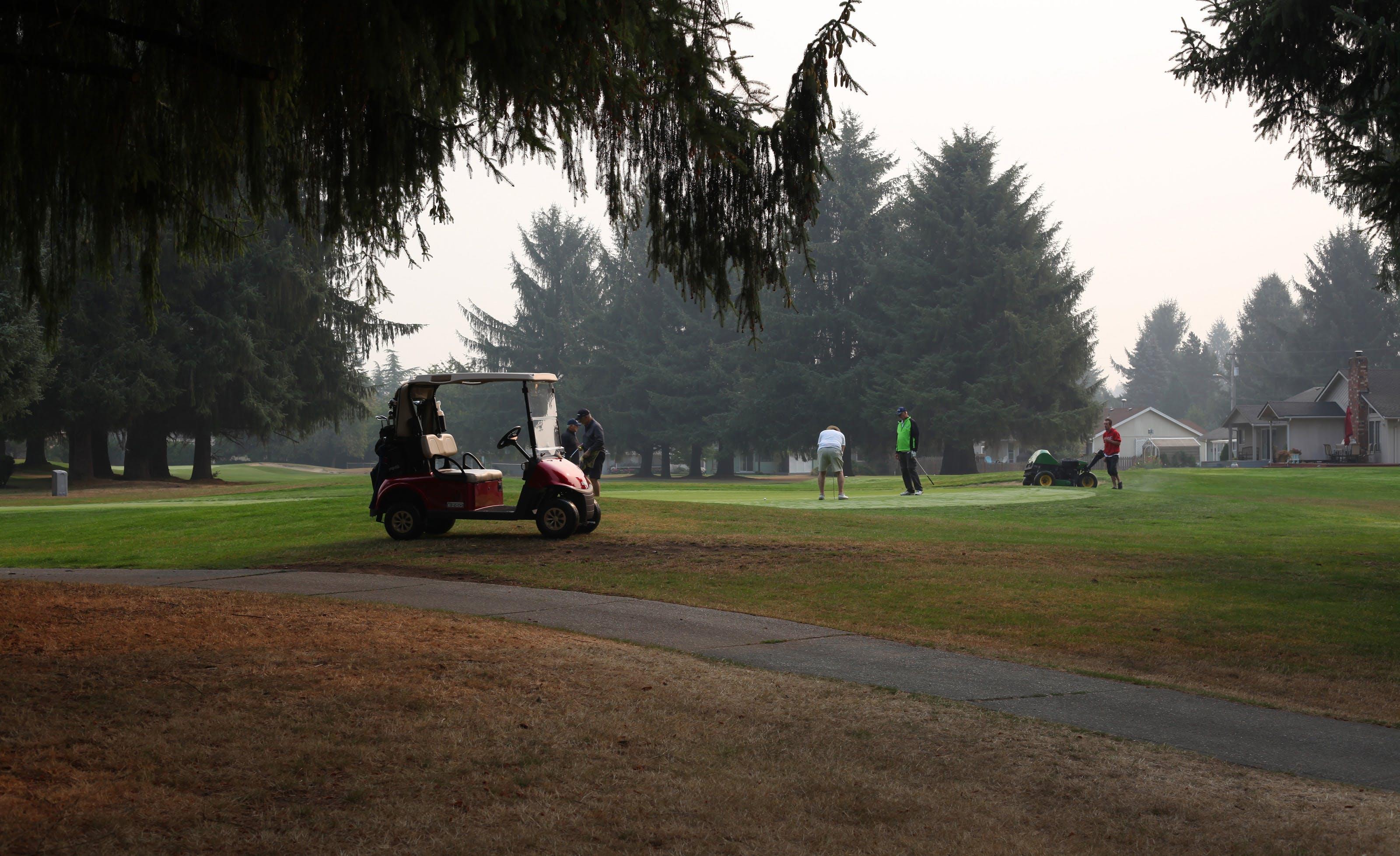 Free stock photo of golf cart trees