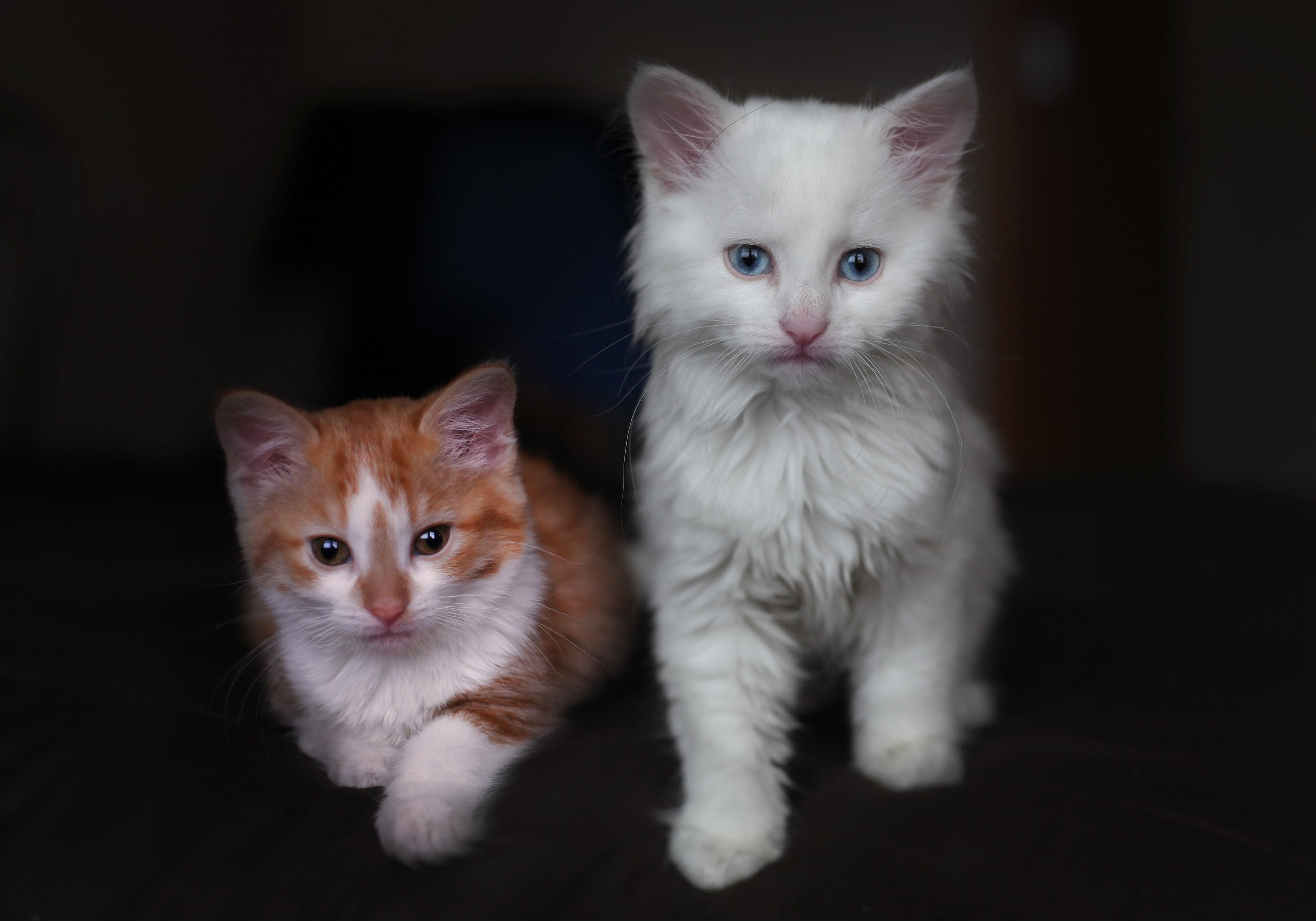 Free stock photo of cats kittens