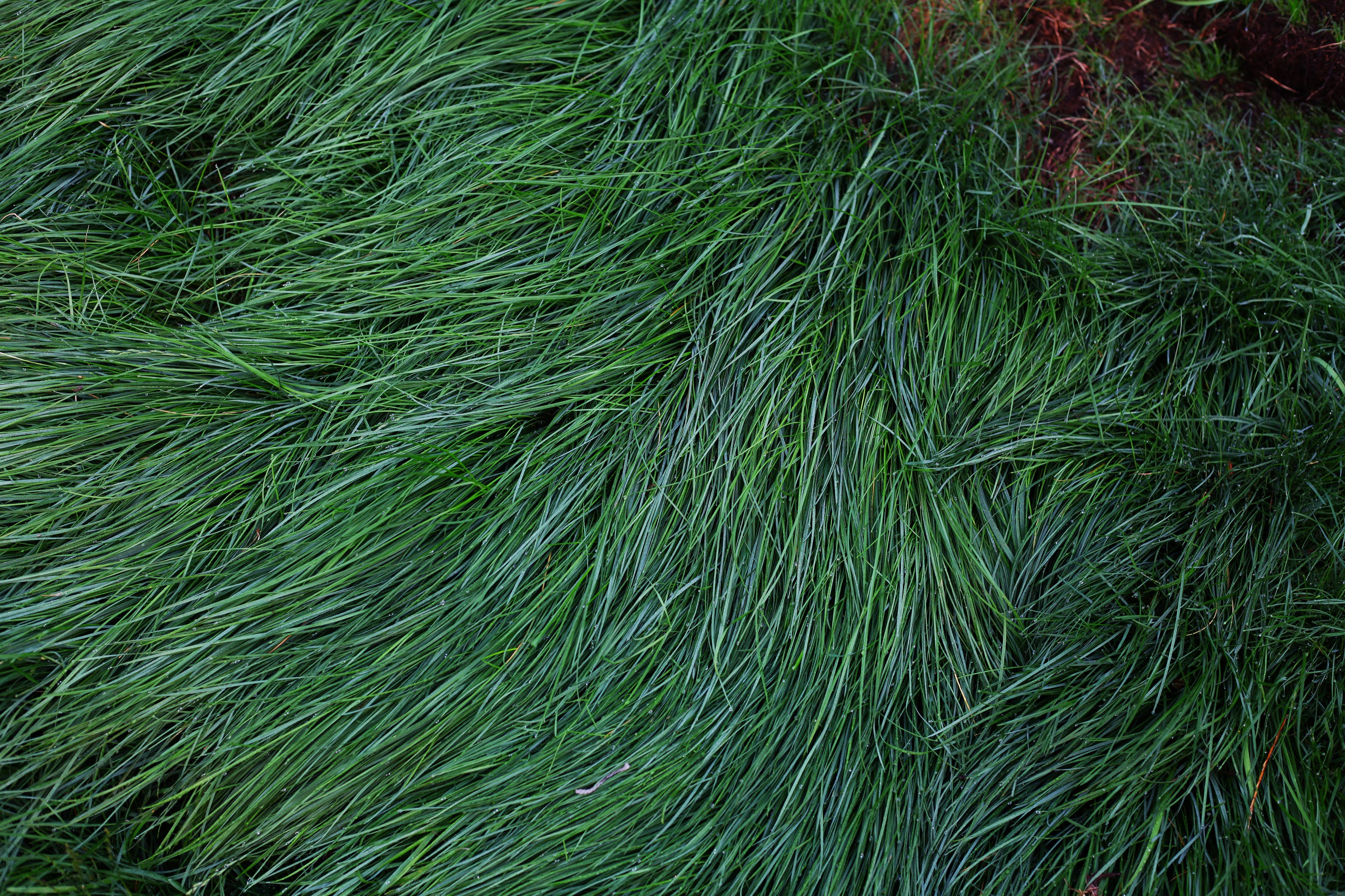 Free stock photo of grass long green