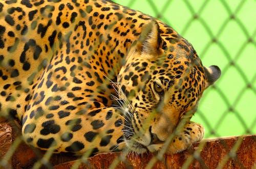 動物, 哺乳動物, 围栏, 圖案 的 免费素材照片