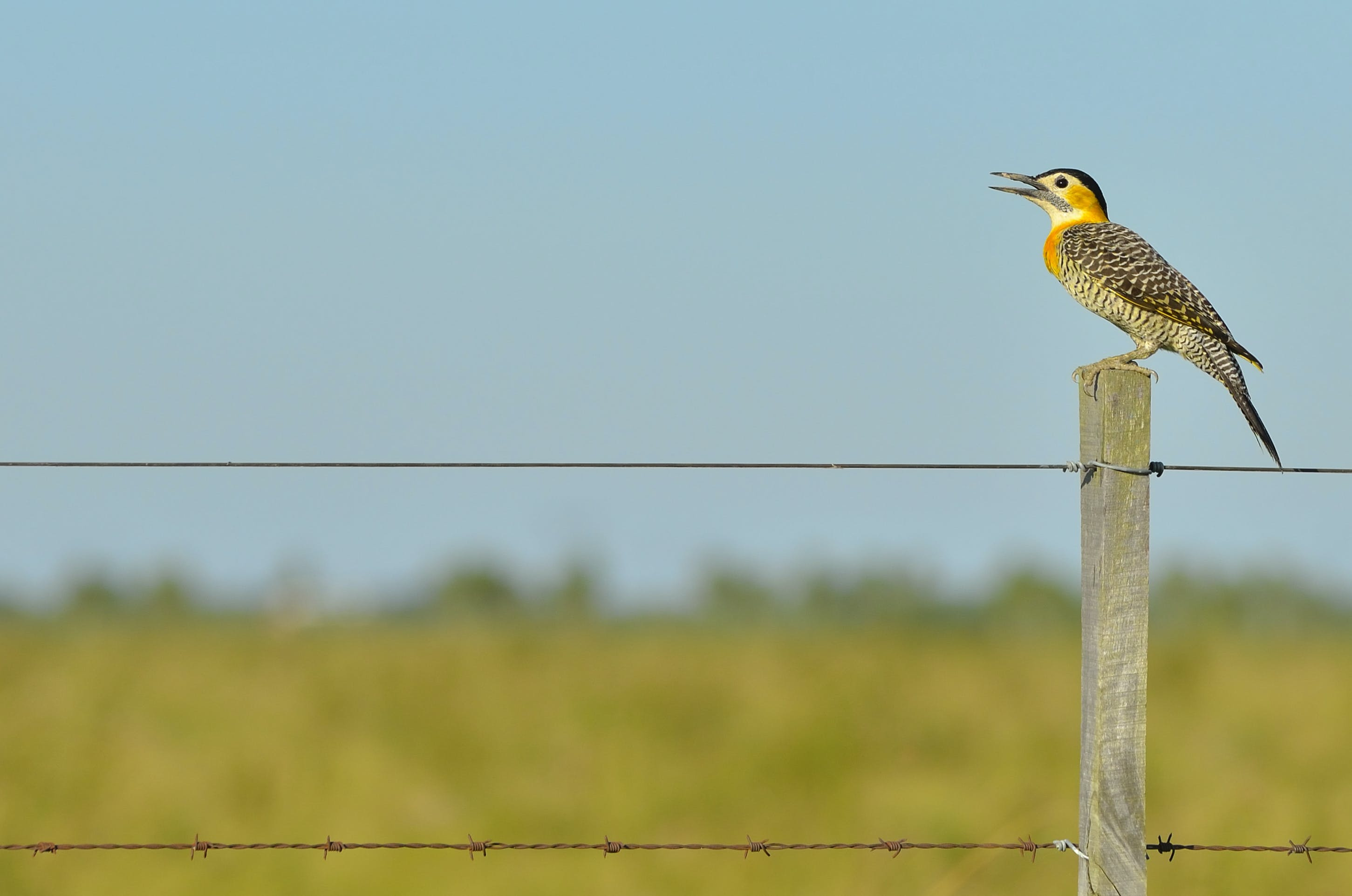 Black White Yellow and Gray Bird Standing on Brown Wooden Fence during Daytime