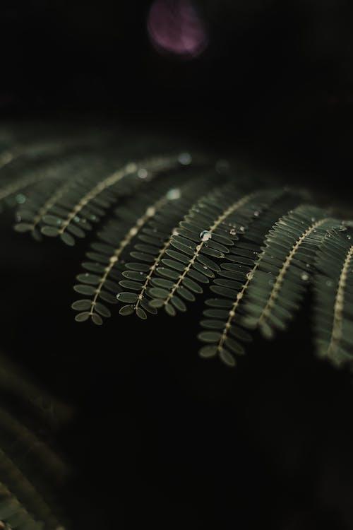 Closeup View of Double Compound Plant