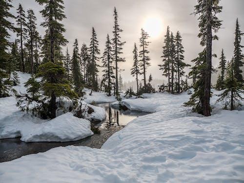 açık hava, Ağaç dalları, ağaçlar, akarsu içeren Ücretsiz stok fotoğraf