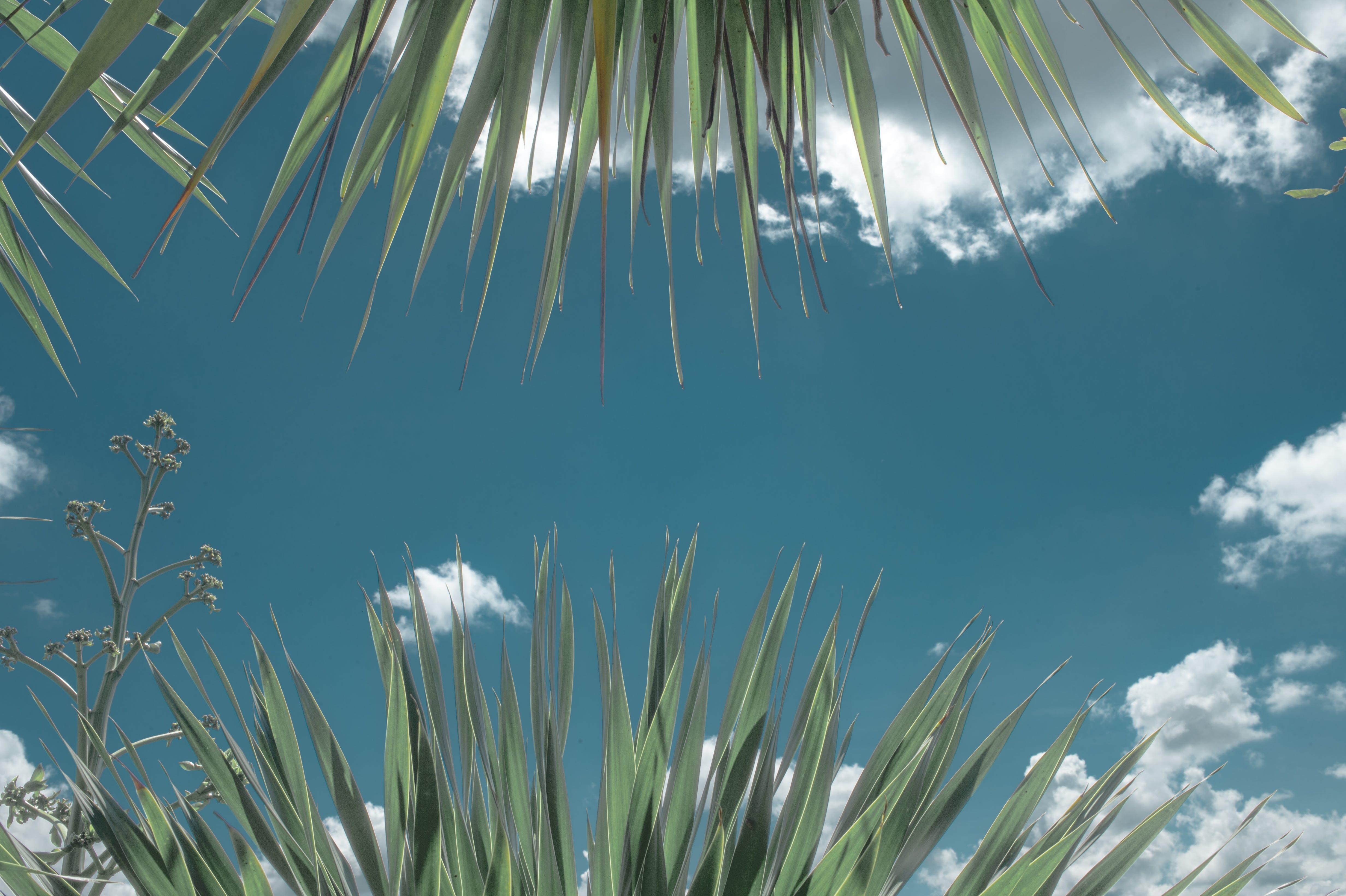 Free stock photo of nature, sky, art, photography