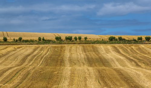Foto stok gratis alam, bidang, gandum, langit