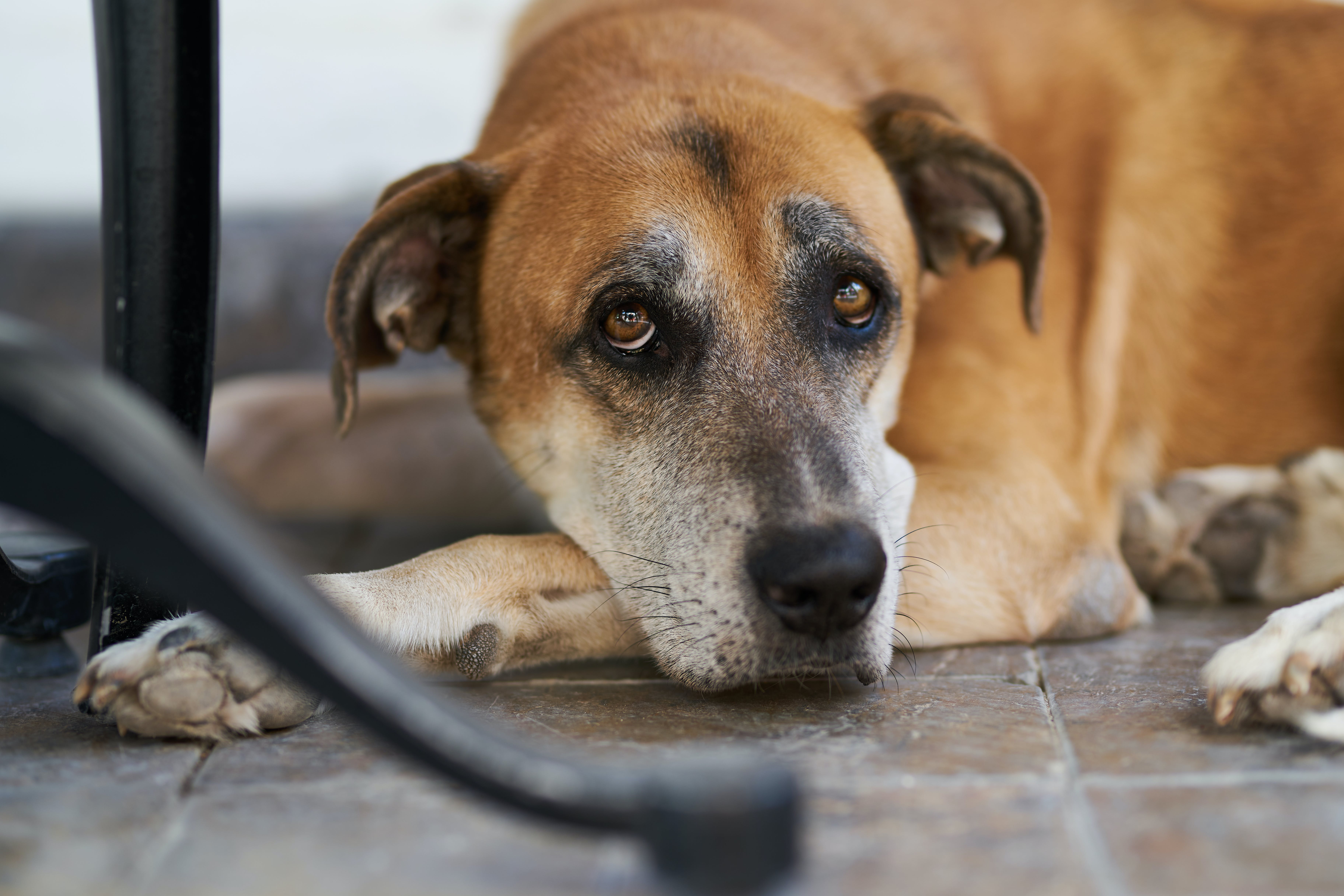 Short-coated Brown and Black Dog Laying on Ground