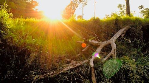 Gratis arkivbilde med gren, gress, landskap, sollys