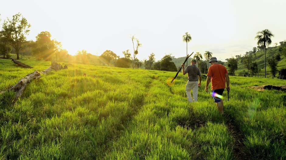 Man Walking Green Field at Daytime