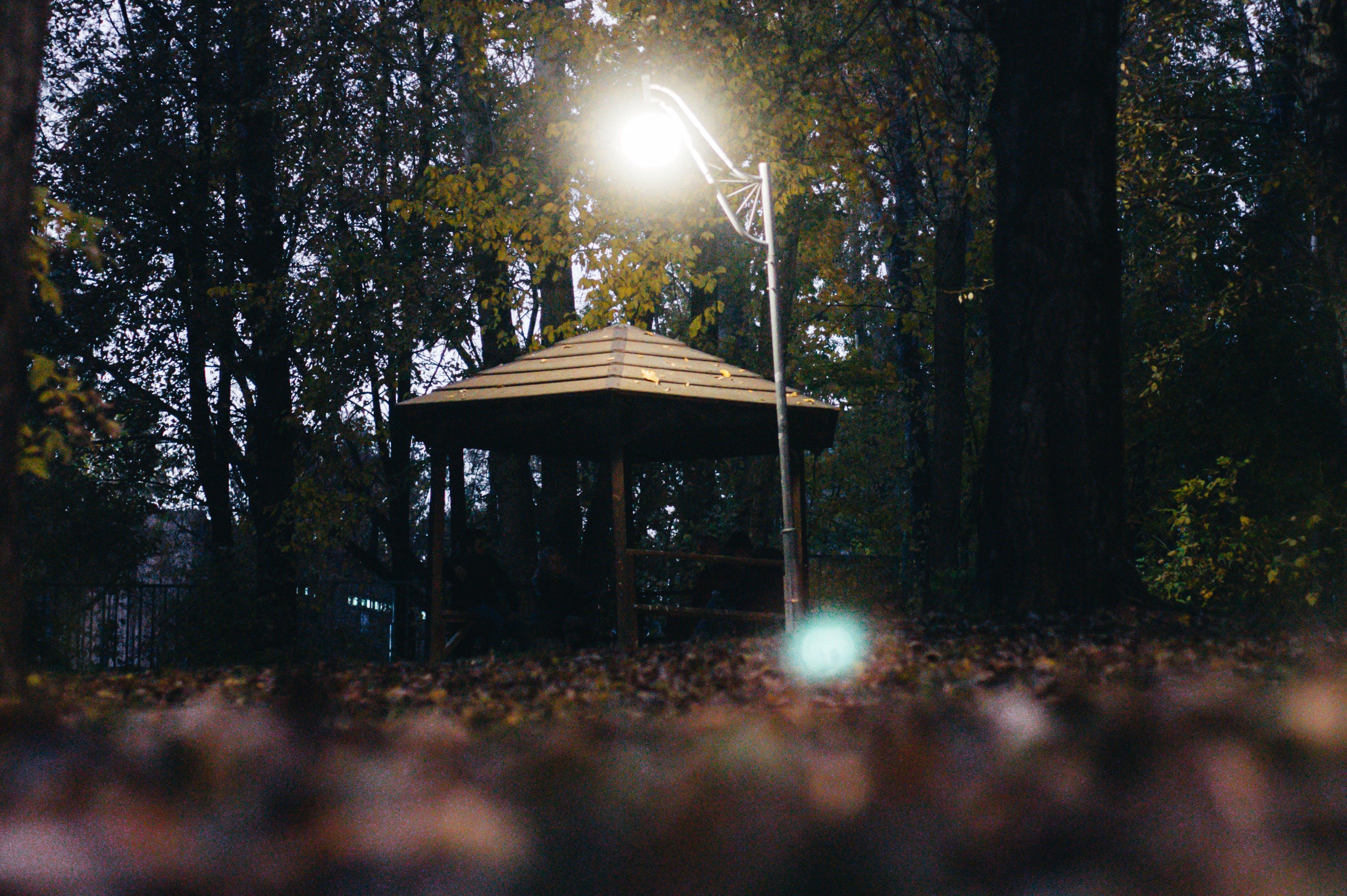 Free stock photo of forest, gazebo, lantern light, park