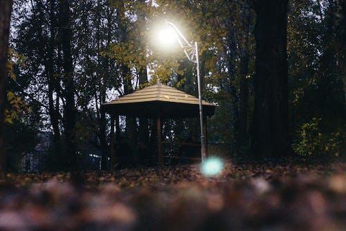 Základová fotografie zdarma na téma altán, les, park, světlo svítidla