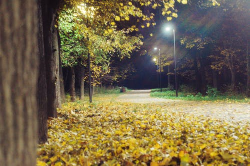 Gratis stockfoto met lantaarn licht, park, straat