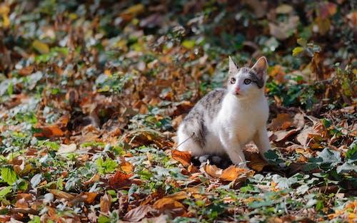 Darmowe zdjęcie z galerii z alarm, fotografia zwierzęcia, futro, jesień