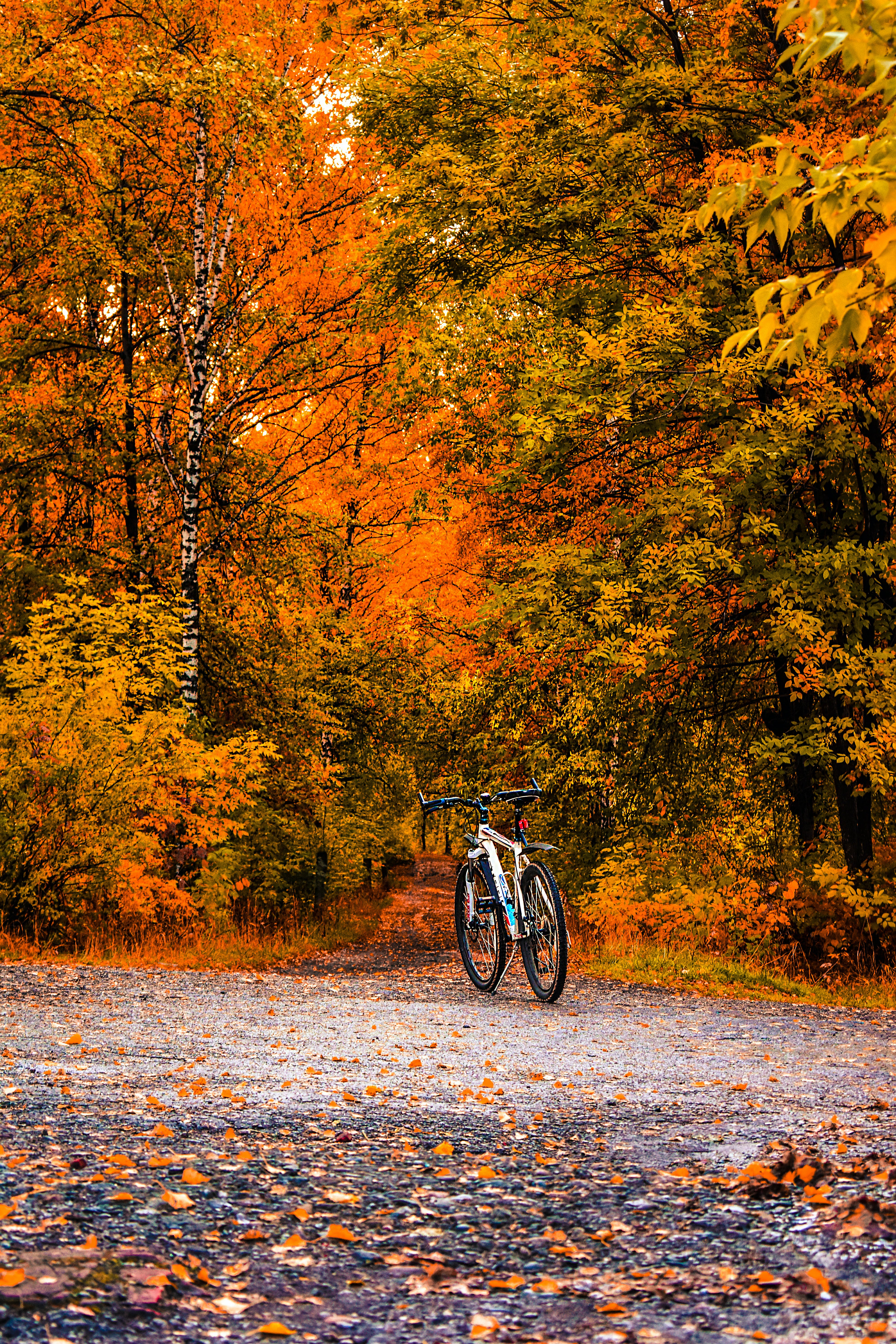 White Bicycle in Between Brown and Green Leafed Trees