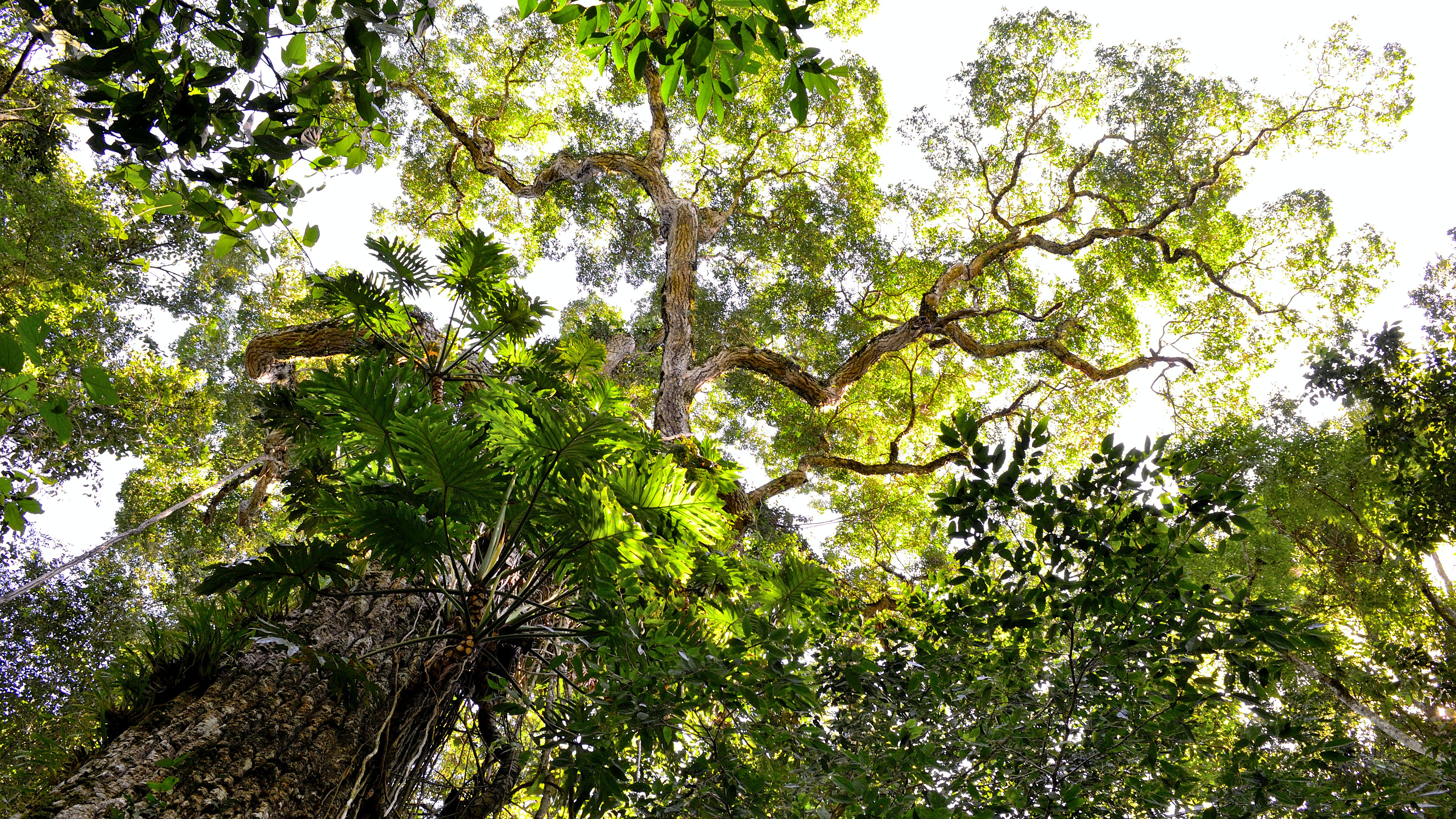 Low Angle Photography of Tall Tree during Daytime