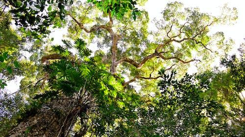 Gratis stockfoto met boom, gezichtspunt, lage hoek schot, takken