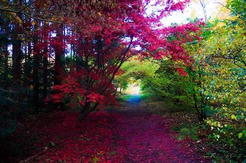 나무, 색깔, 색상의 무료 스톡 사진