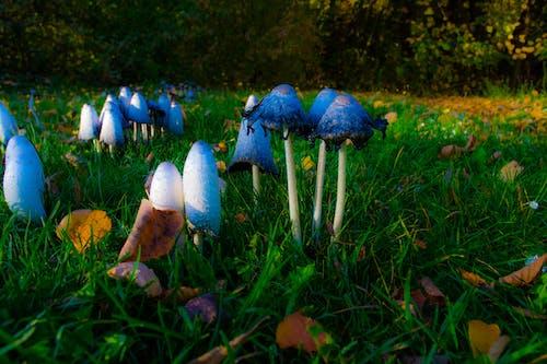 Gratis stockfoto met bospaddenstoel, gras, paddenstoel