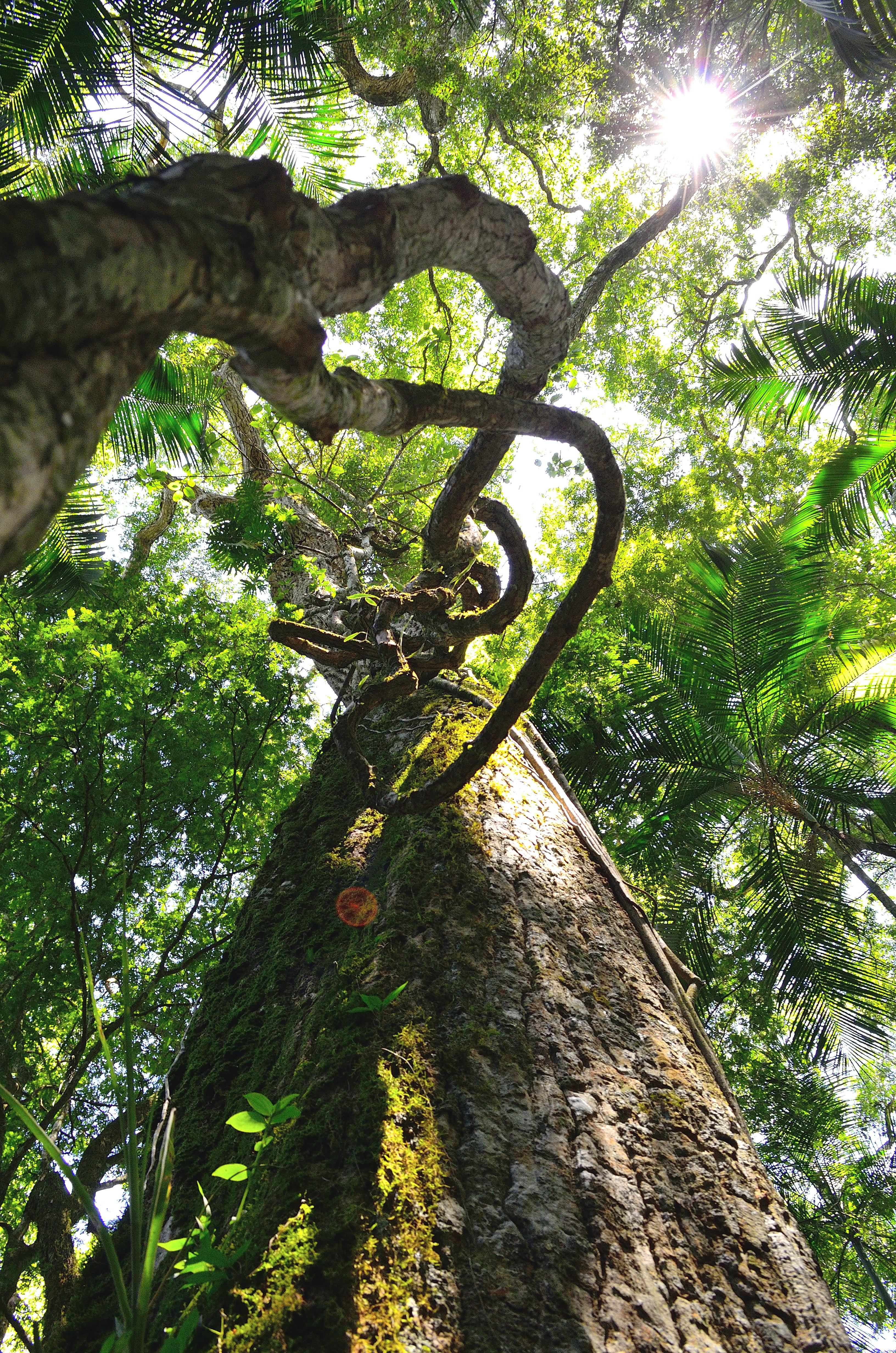 brown tall trees under sunny sky  u00b7 free stock photo
