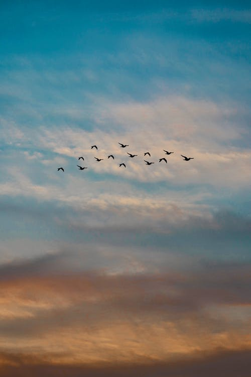 1000 Beautiful Flying Birds Photos Pexels Free Stock Photos