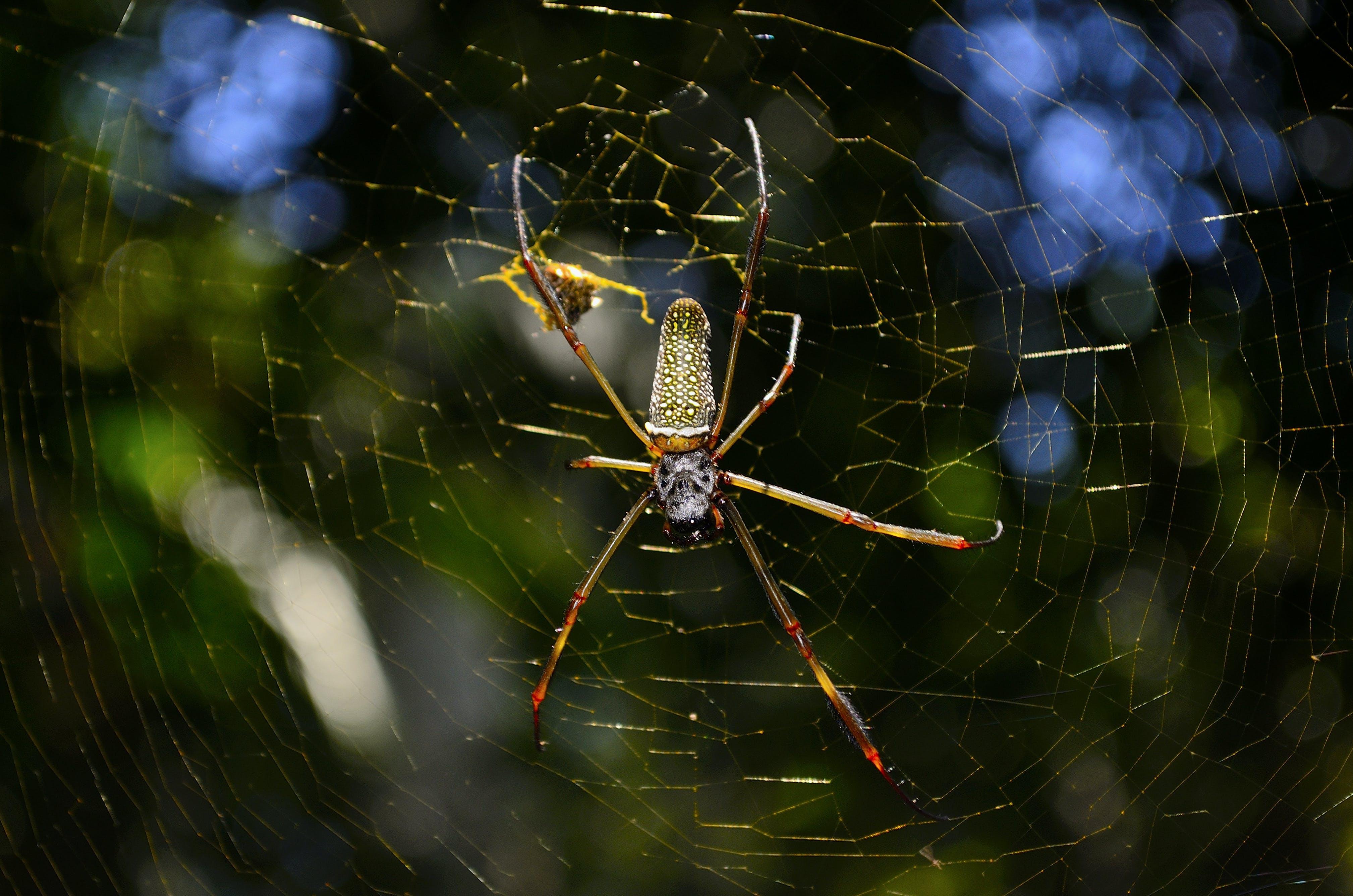 Web, 令人不寒而慄的, 害怕, 昆蟲 的