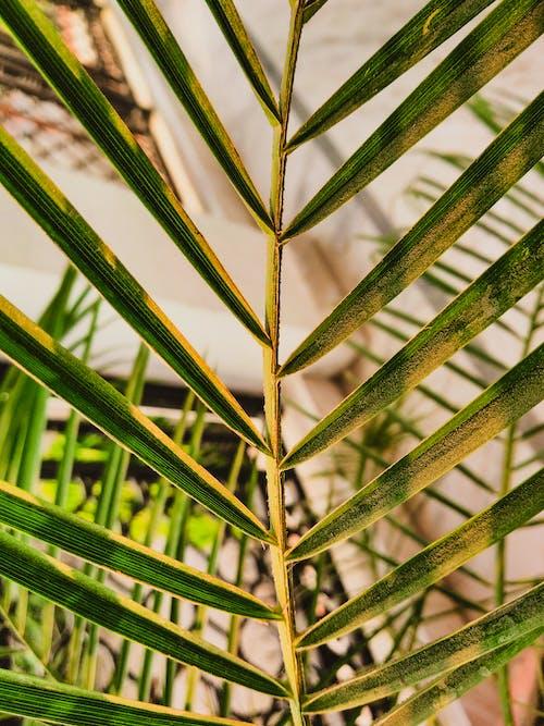 Darmowe zdjęcie z galerii z zielone liście, zielony, zielony liść