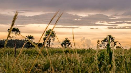 Δωρεάν στοκ φωτογραφιών με Ανατολή ηλίου, αυγή, γήπεδο, γρασίδι