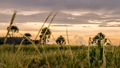 Gratis arkivbilde med åker, daggry, gress, himmel