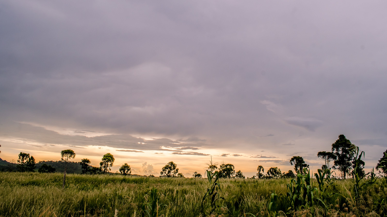Photos gratuites de ciel, clairière, exploitation agricole, herbe