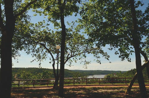 Безкоштовне стокове фото на тему «Денне світло, дерева, краєвид, ліс»