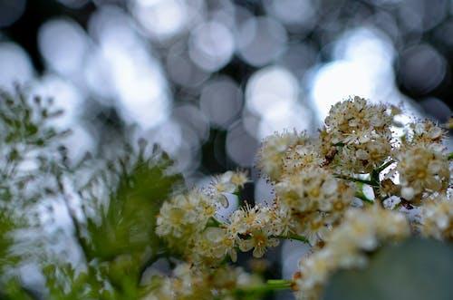 Photos gratuites de arbre, branche, fleur, fleurir