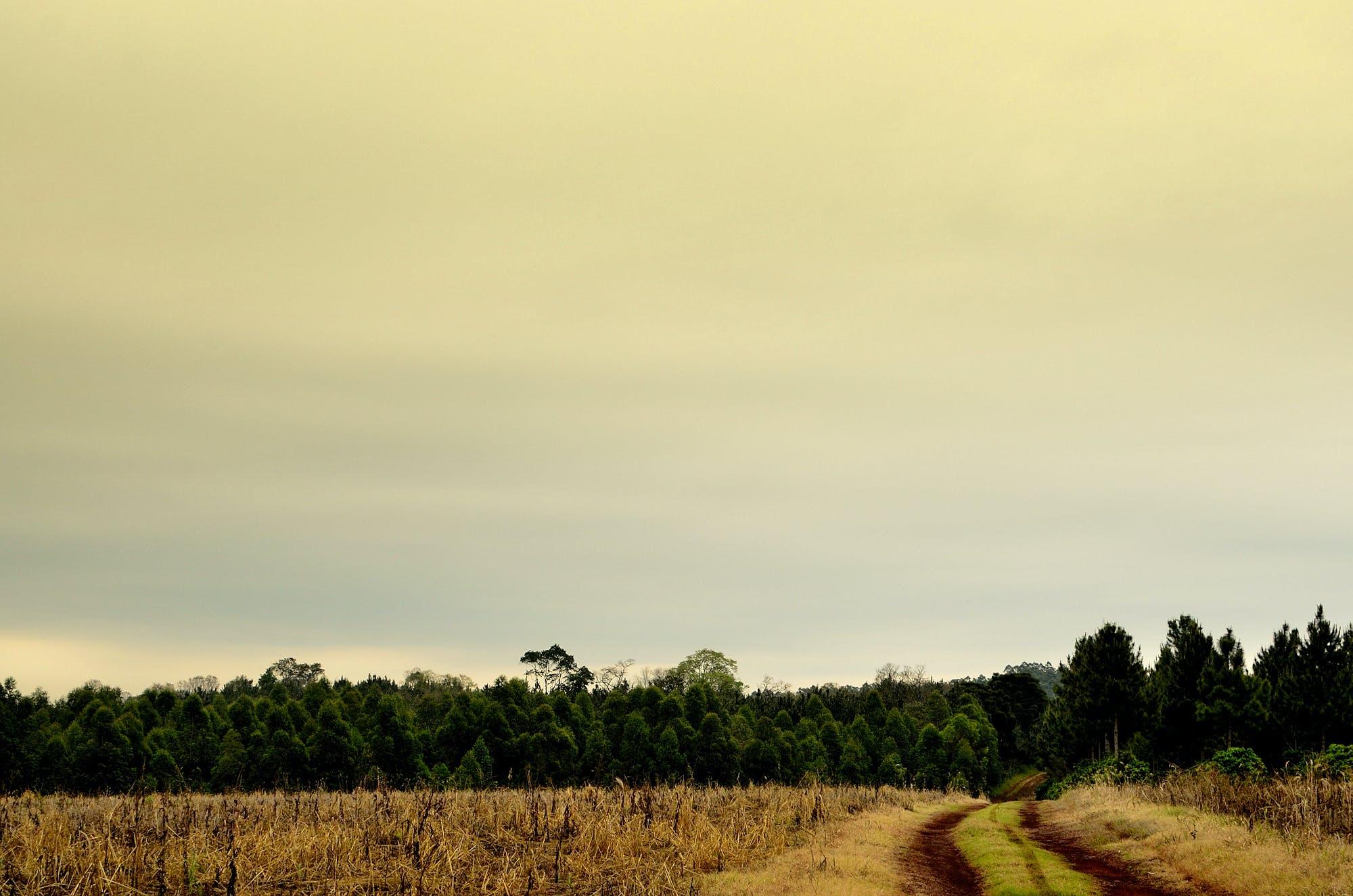 Green Tall Trees