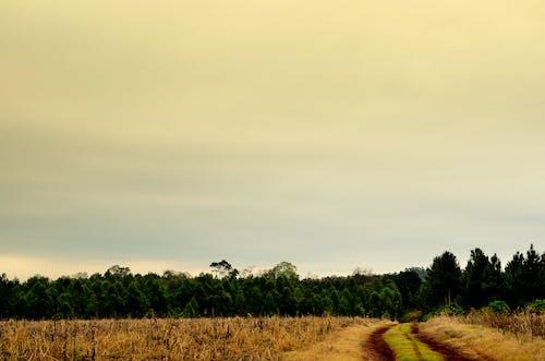 Darmowe zdjęcie z galerii z drzewa, krajobraz, niebo, pastwisko