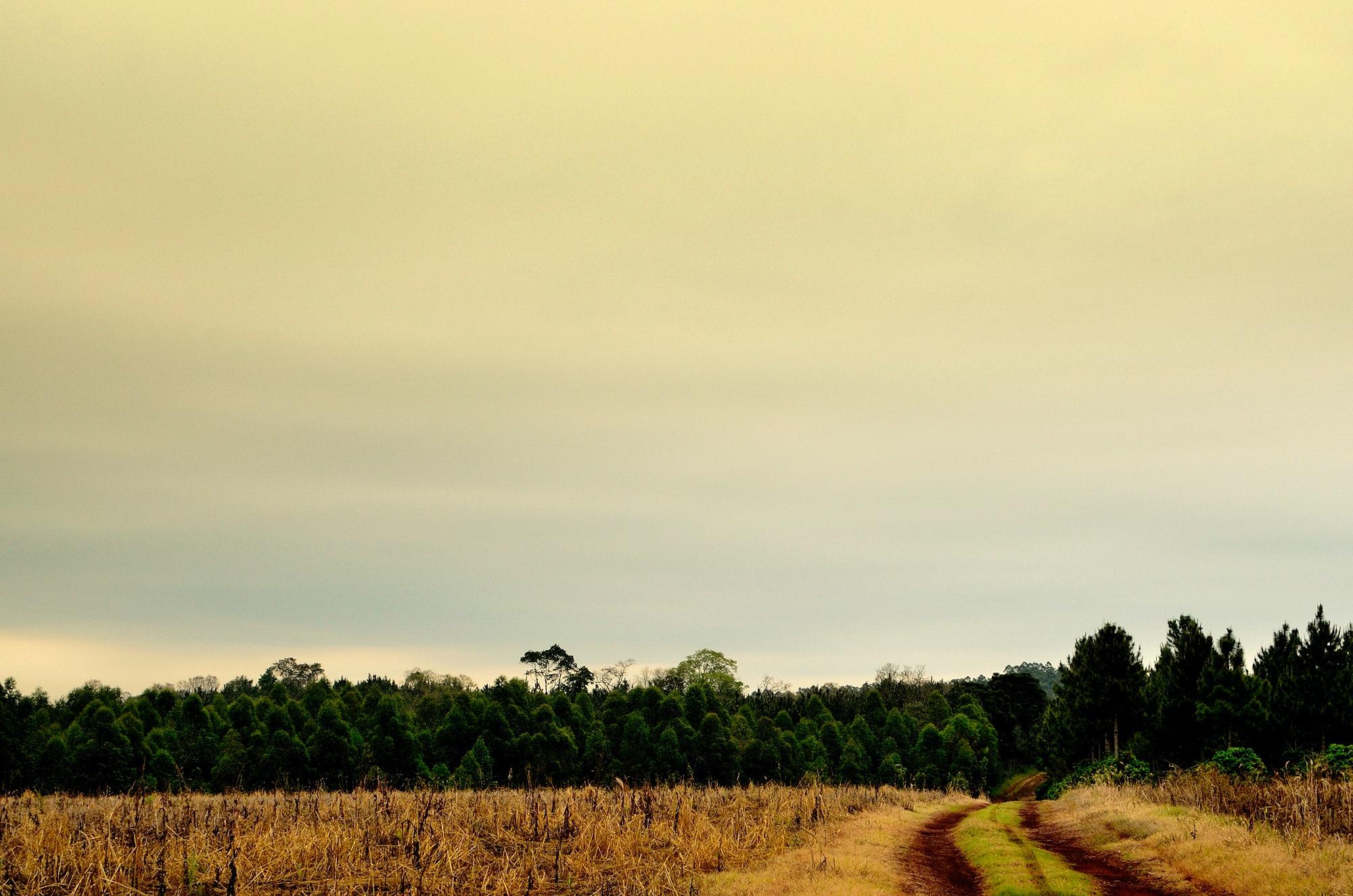 Sunrise On Green Grass Field 183 Free Stock Photo
