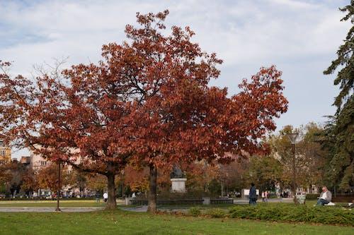 城市公園, 樹 的 免费素材照片