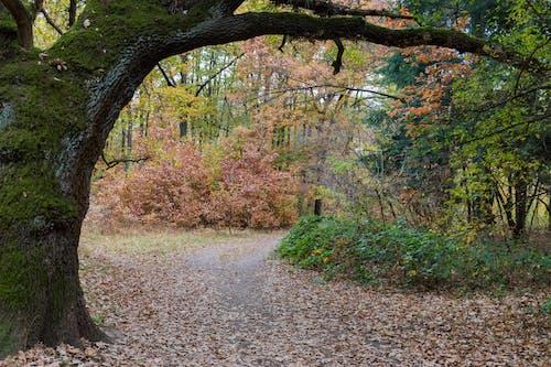 城市公園, 樹木 的 免费素材照片