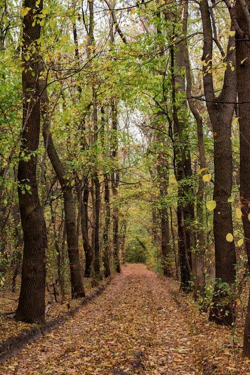 城市公園, 小徑, 樹木, 路徑 的 免费素材照片