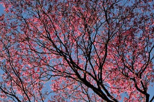 Darmowe zdjęcie z galerii z drzewo, flora, jasny, kolor