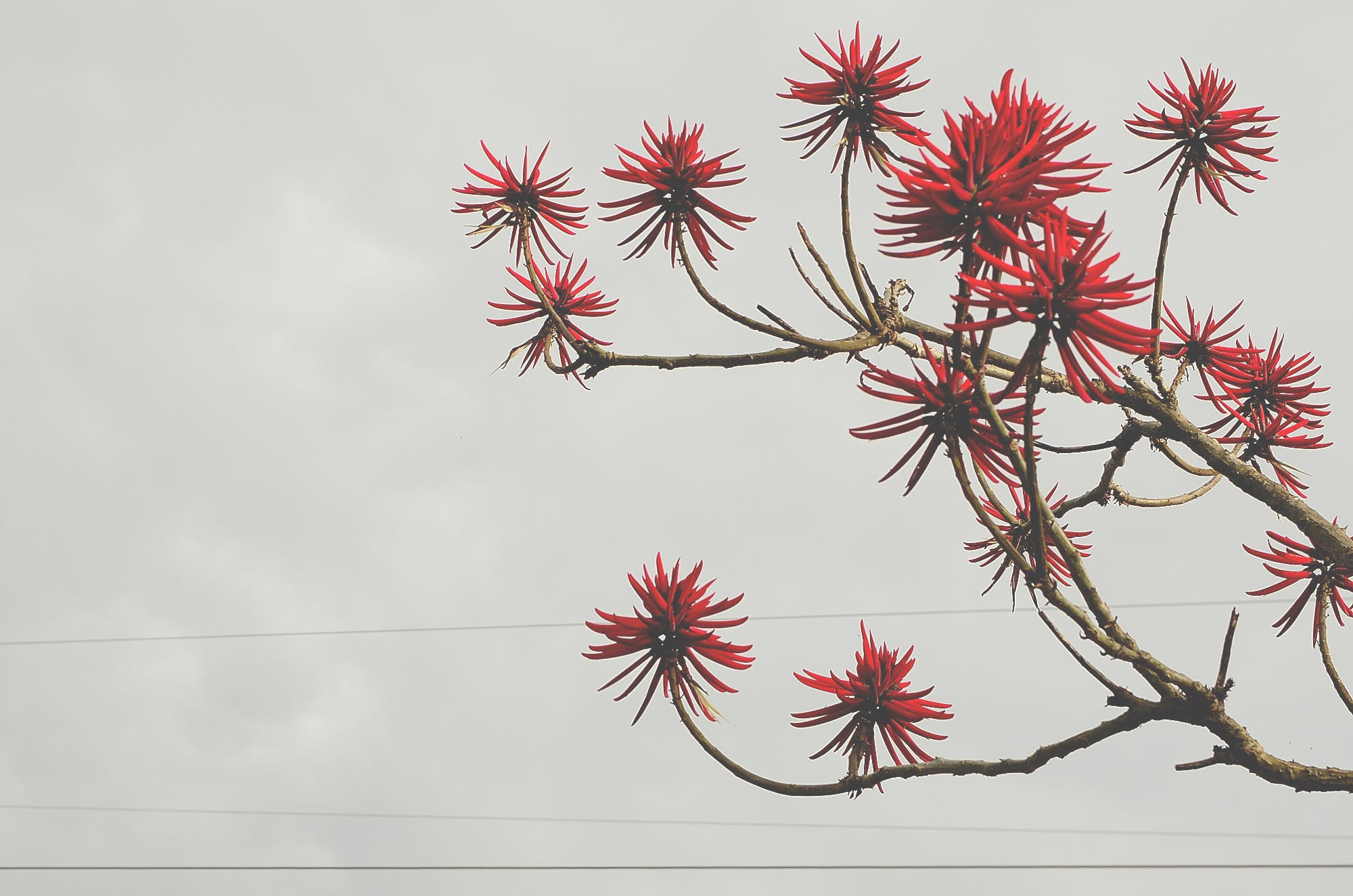 Red Flowers Bloomed Front Brown Tree Branch