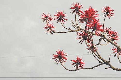 Imagine de stoc gratuită din arbore, cer, copac, crengi