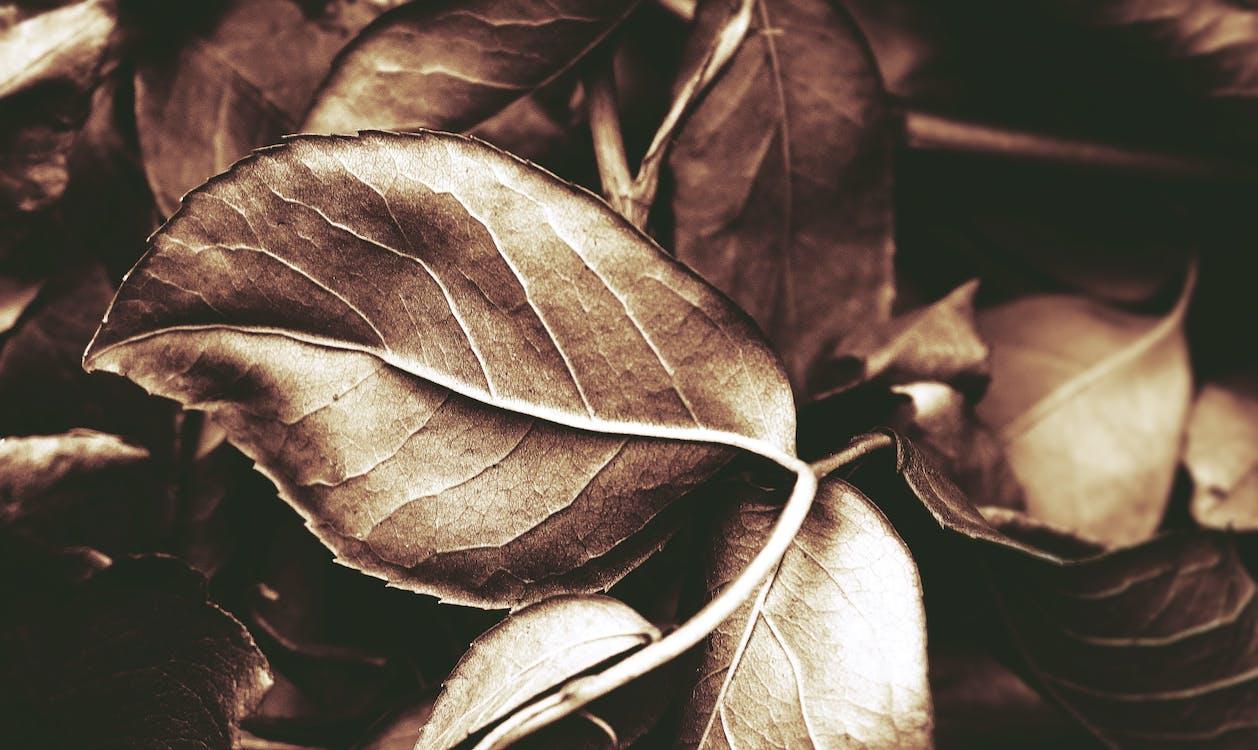 árbol, flora, follaje de otoño