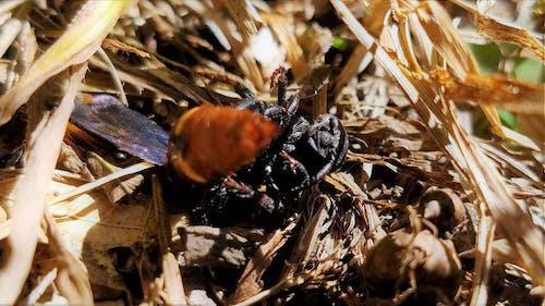 Ilmainen kuvapankkikuva tunnisteilla ampiainen, kuollut ampiainen, kuollut vika, kuoriainen