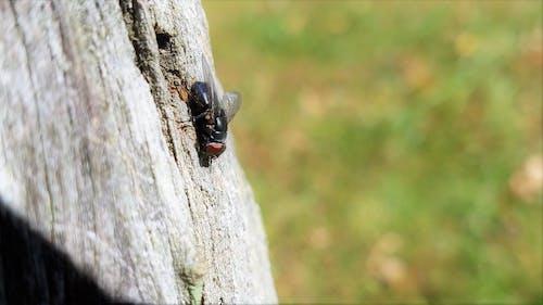 Ilmainen kuvapankkikuva tunnisteilla kuoriainen, lentävä bug, puinen posti, sumennettu tausta