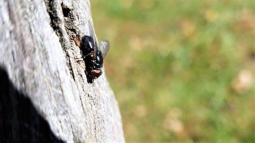 Ilmainen kuvapankkikuva tunnisteilla kuoriainen, lentävä bug, makrokuvaus, puinen posti