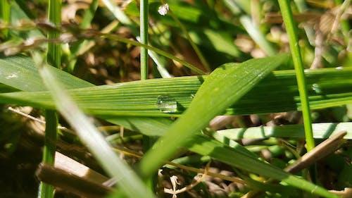 Ilmainen kuvapankkikuva tunnisteilla lämmin väri, märkä ruoho, ruohonkorsi, valikoiva tarkennus
