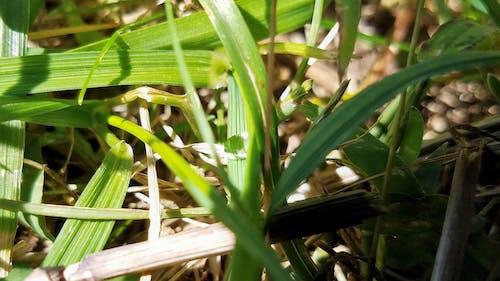 Ilmainen kuvapankkikuva tunnisteilla märkä ruoho, ruoho, ruohonkorsi, valikoiva tarkennus