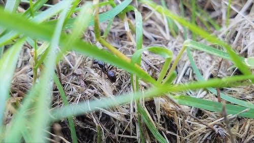 Ilmainen kuvapankkikuva tunnisteilla kuiva ruoho, kuoriainen, liikkuva vika, makrokuva