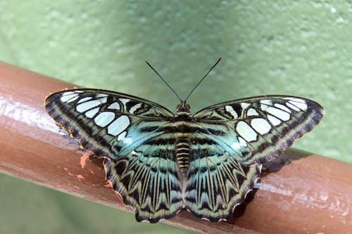 Photos gratuites de papillon
