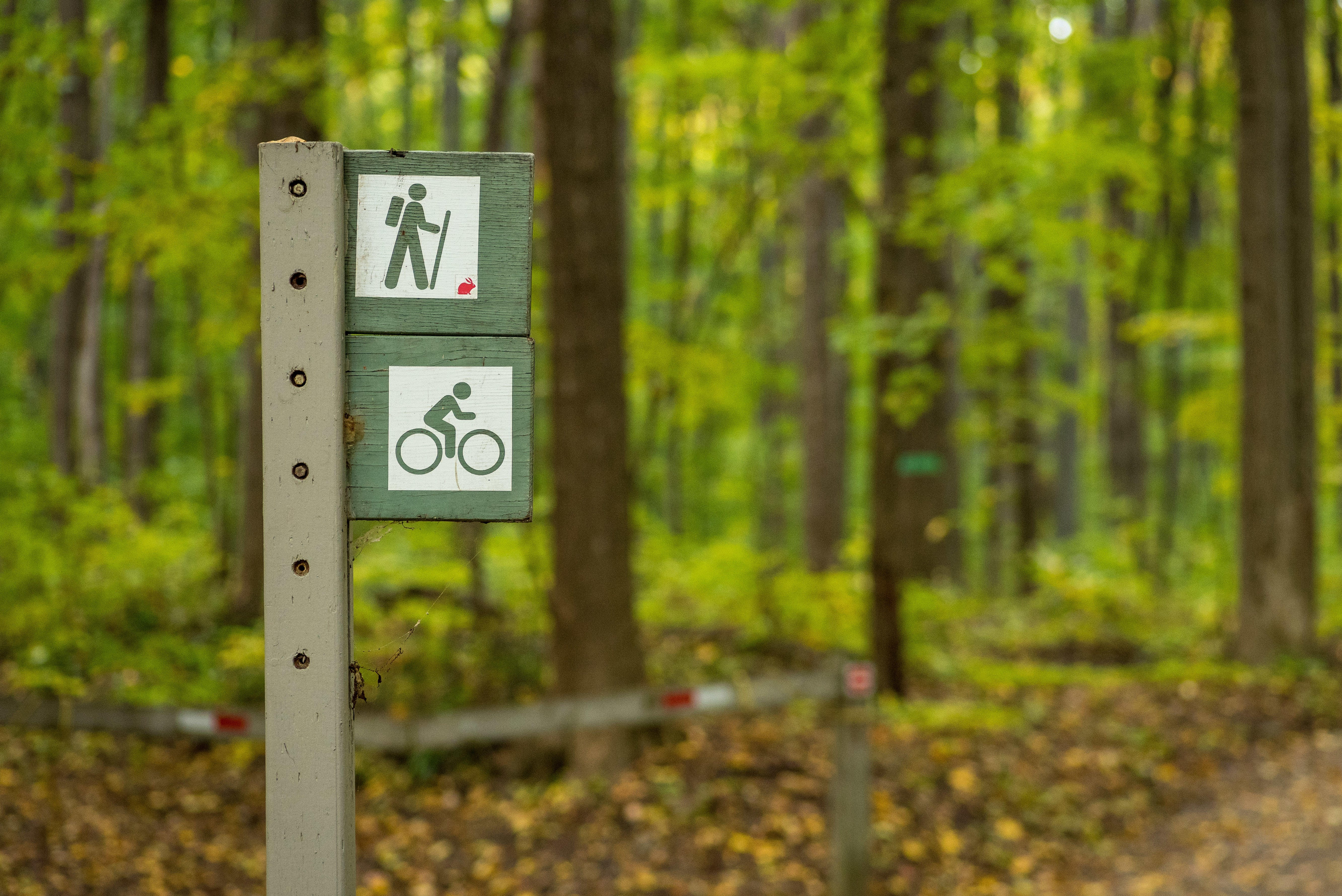 Free stock photo of bicycling, forest, park